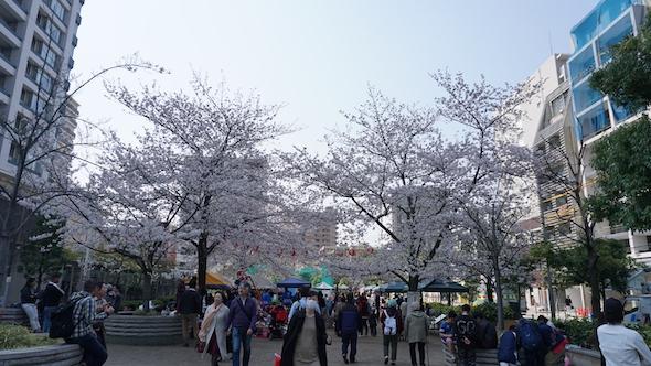 白金新聞#023お花見写真011